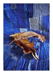 Still Life: Two Leaves and Boro, var. 1