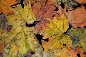 Leaf Fall, var. 4, Forest Floor detail